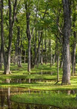 Obel Award 2019 - Art Biotop Water Garden